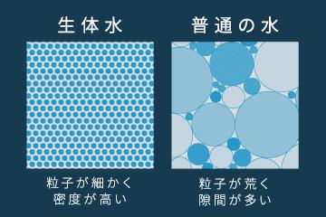 生体水と普通の水の粒子と密度の違い